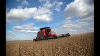 Soybeans are harvested outside of Salina, Kan., Nov. 2, 2018. (Christopher Smith/The New York Times)